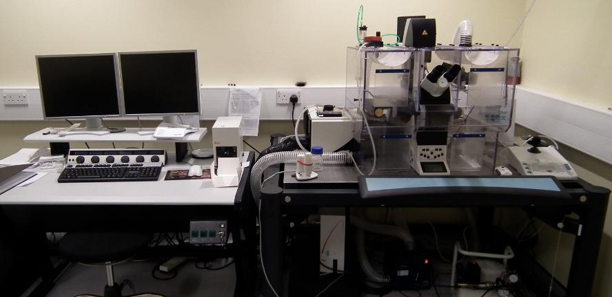 Leica SP5 Scanning Confocal Microscope - Inverted